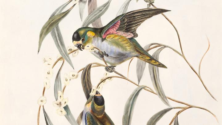 The Life and Influence of John James Audubon