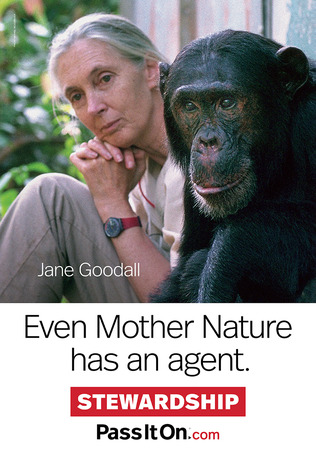 Stewardship jane goodall thumb