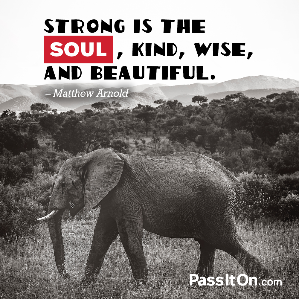 Strong is the soul, kind, and wise, and beautiful.  —Matthew Arnold
