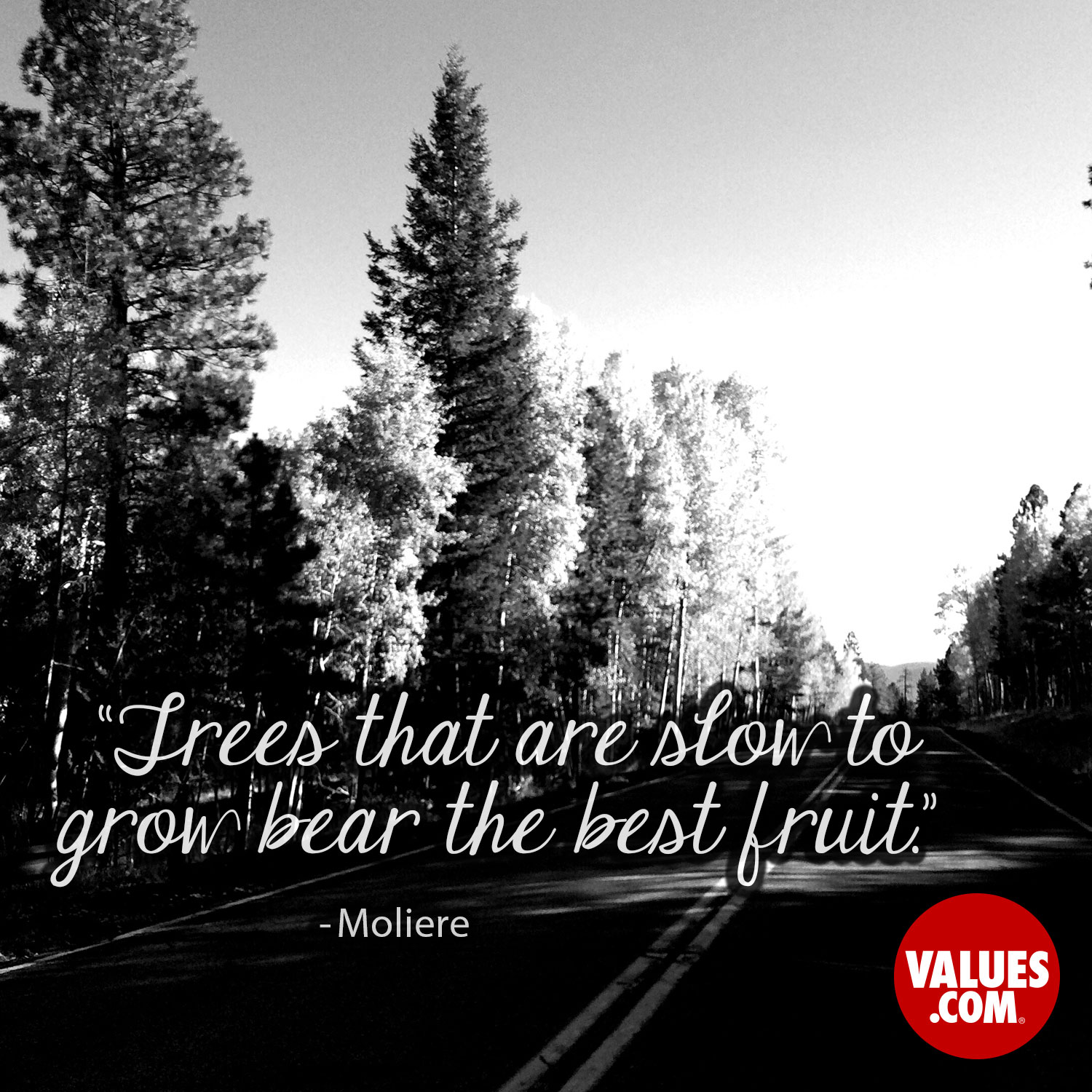 Trees that are slow to grow bear the best fruit. —Moliere