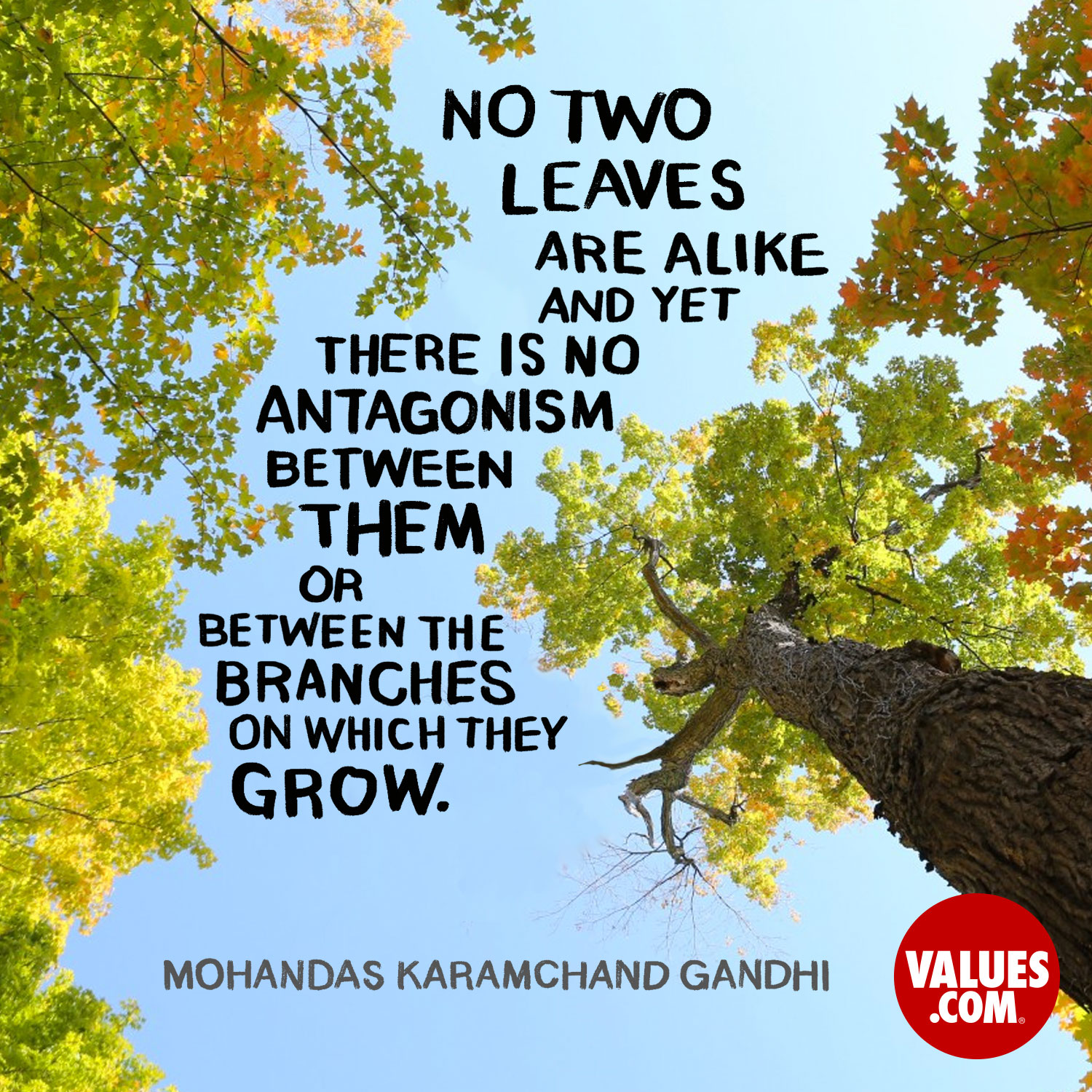 No two leaves are alike, and yet there is no antagonism between them or between the branches on which they grow. —Mohandas Karamchand Gandhi