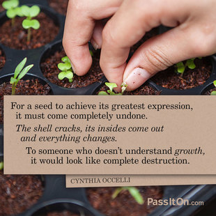For a seed to achieve its greatest expression, it must come completely undone. The shell cracks, its insides come out and everything changes. To someone who doesn't understand growth, it would look like complete destruction. #<Author:0x00007f15099a1710>