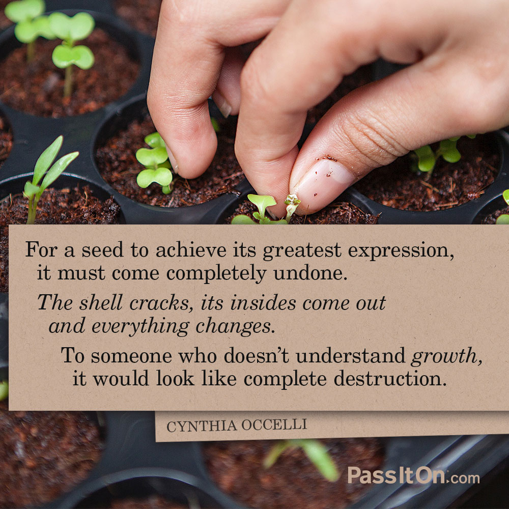 For a seed to achieve its greatest expression, it must come completely undone. The shell cracks, its insides come out and everything changes. To someone who doesn't understand growth, it would look like complete destruction. —Cynthia Occelli