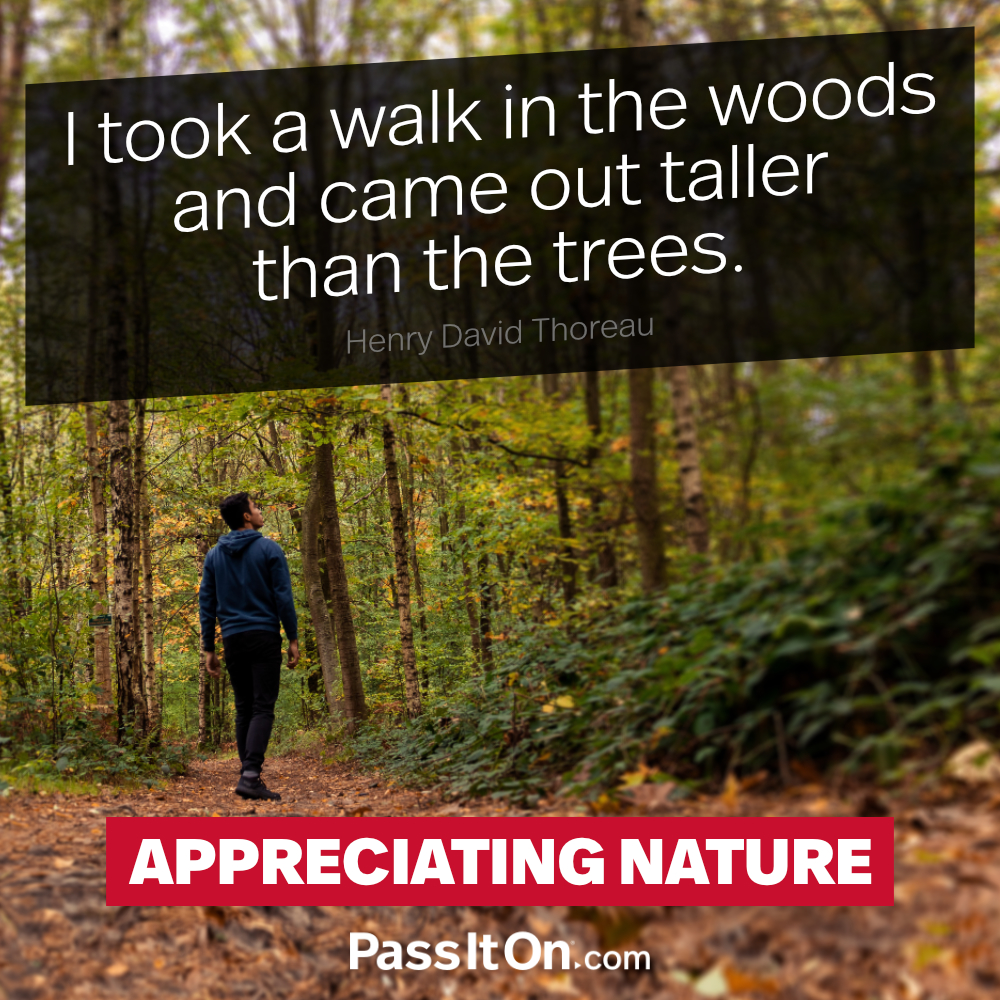 I took a walk in the woods and came out taller than the trees. —Henry David Thoreau